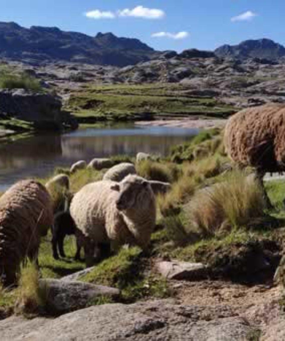 uschinatrip.com-Argentina-argentina-3827443__340