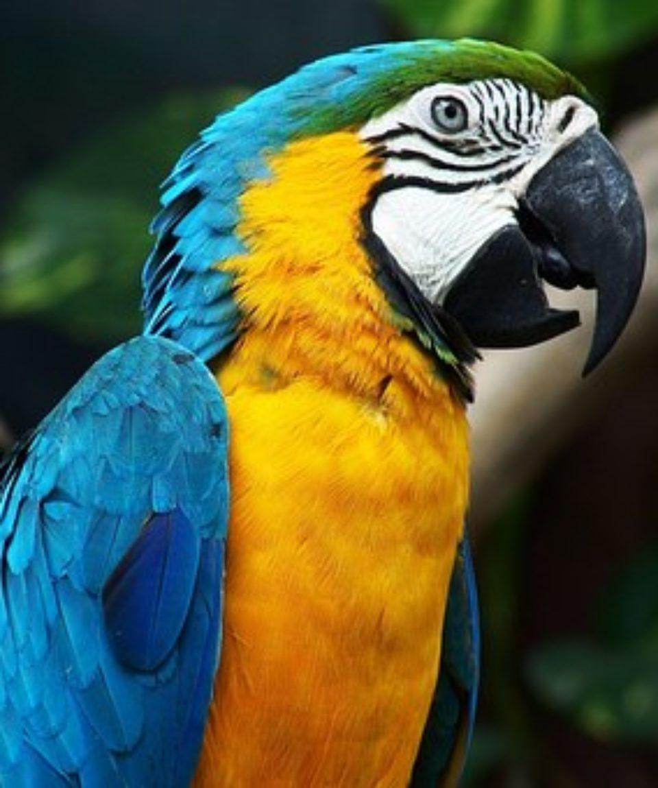 uschinatrip.com-Brazil-parrot-1218241__340