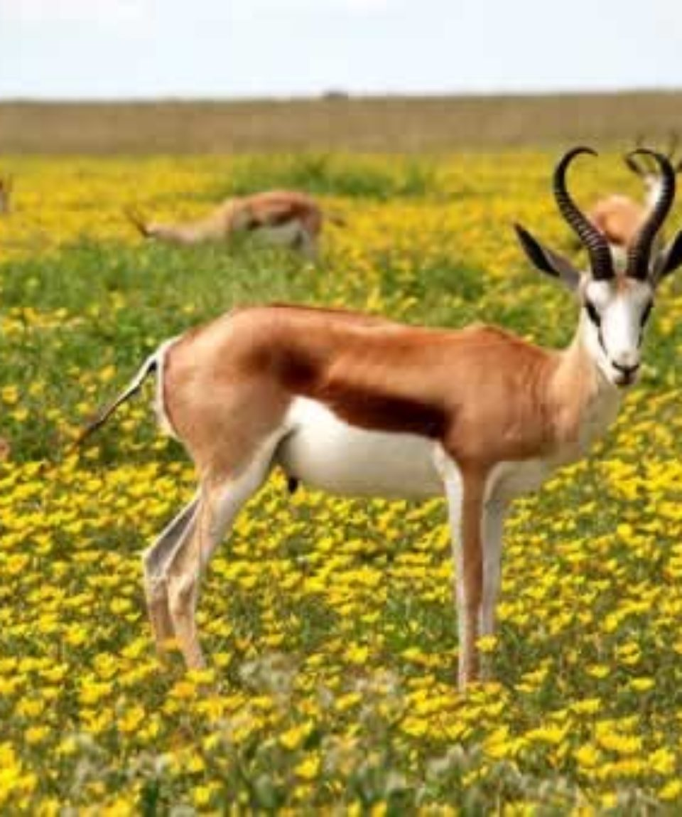uschinatrip.com-africa-antelope-425161__340