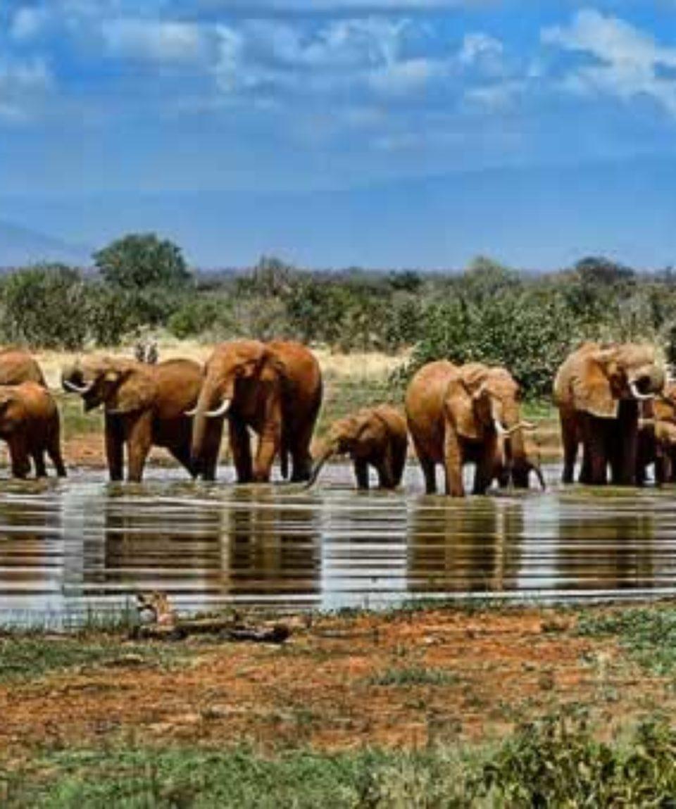 uschinatrip.com-africa-elephant-1065632__340