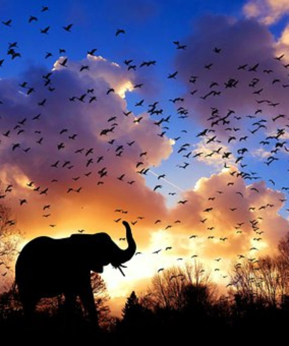 uschinatrip.com-africa-elephant-3117217__340