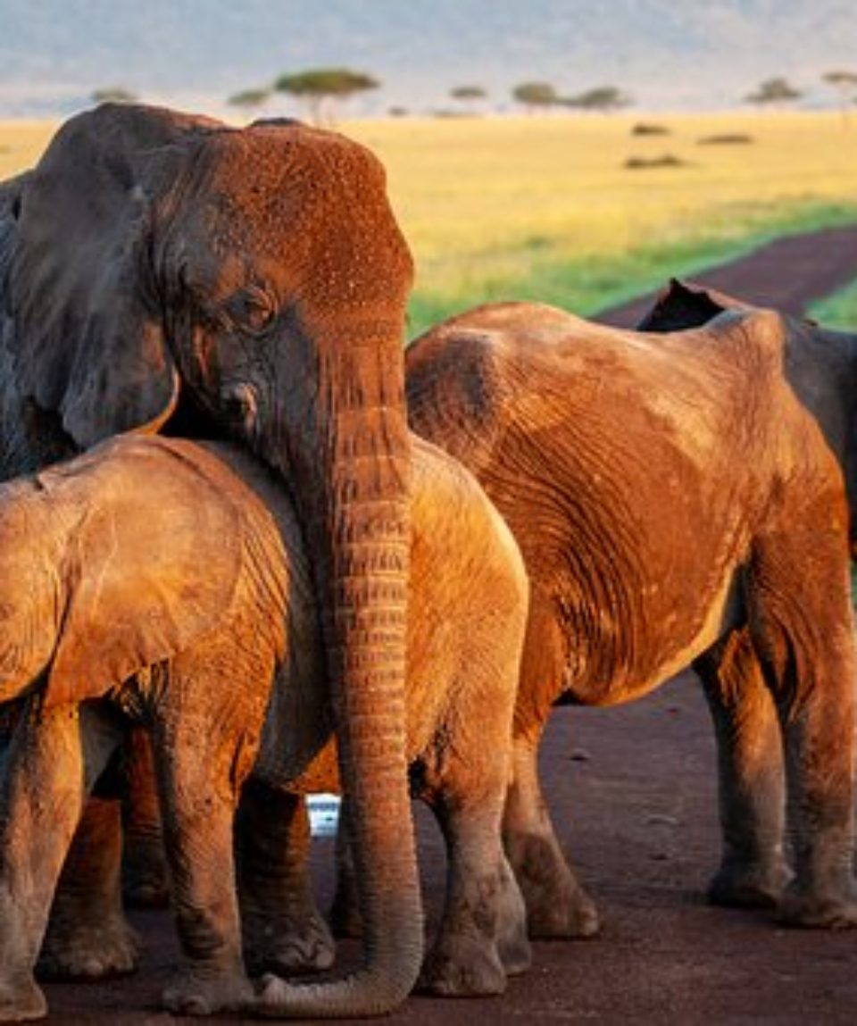 uschinatrip.com-africa-elephant-4120822__340