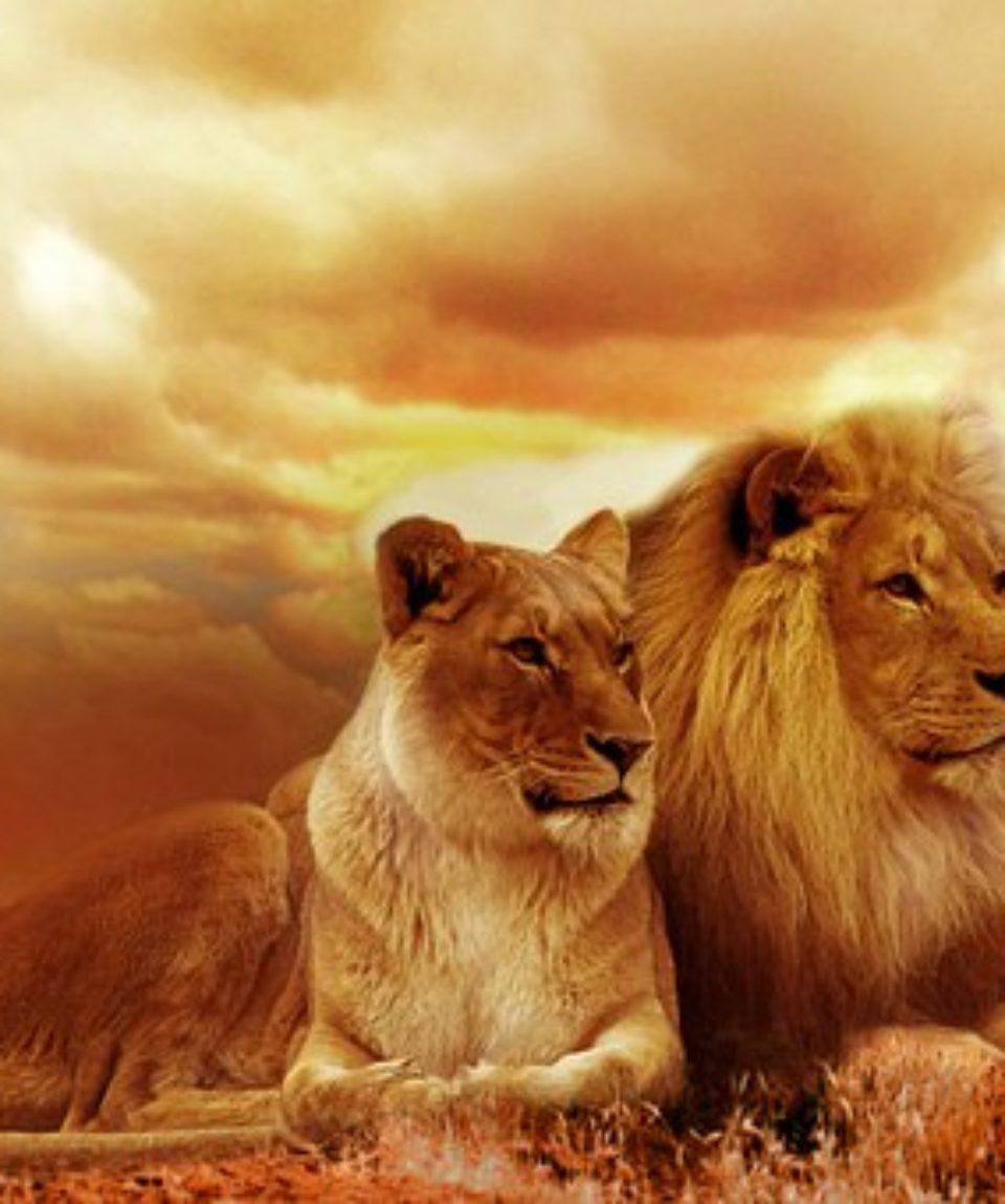 uschinatrip.com-africa-lion