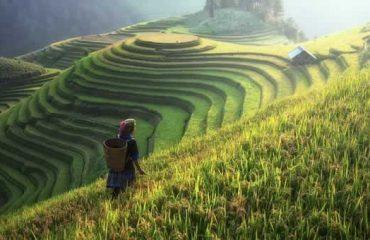 uschinatrip.com-china-agriculture-1807576__340