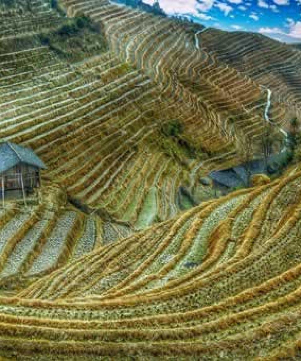 uschinatrip.com-china-rice-field-2513023__340