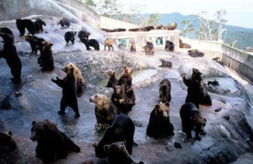 uschinatrip-hokkaido-bear