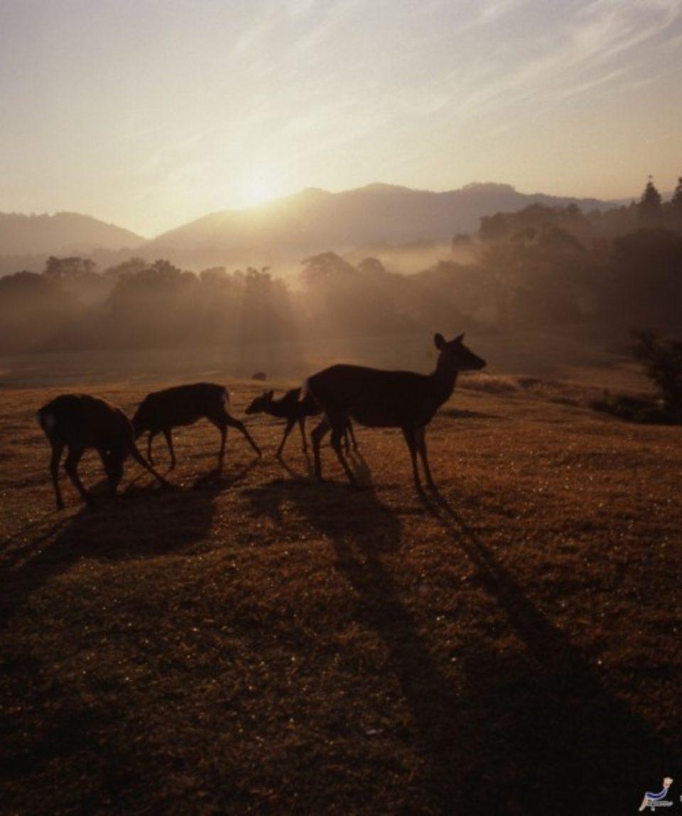 uschinatrip-japan-deer